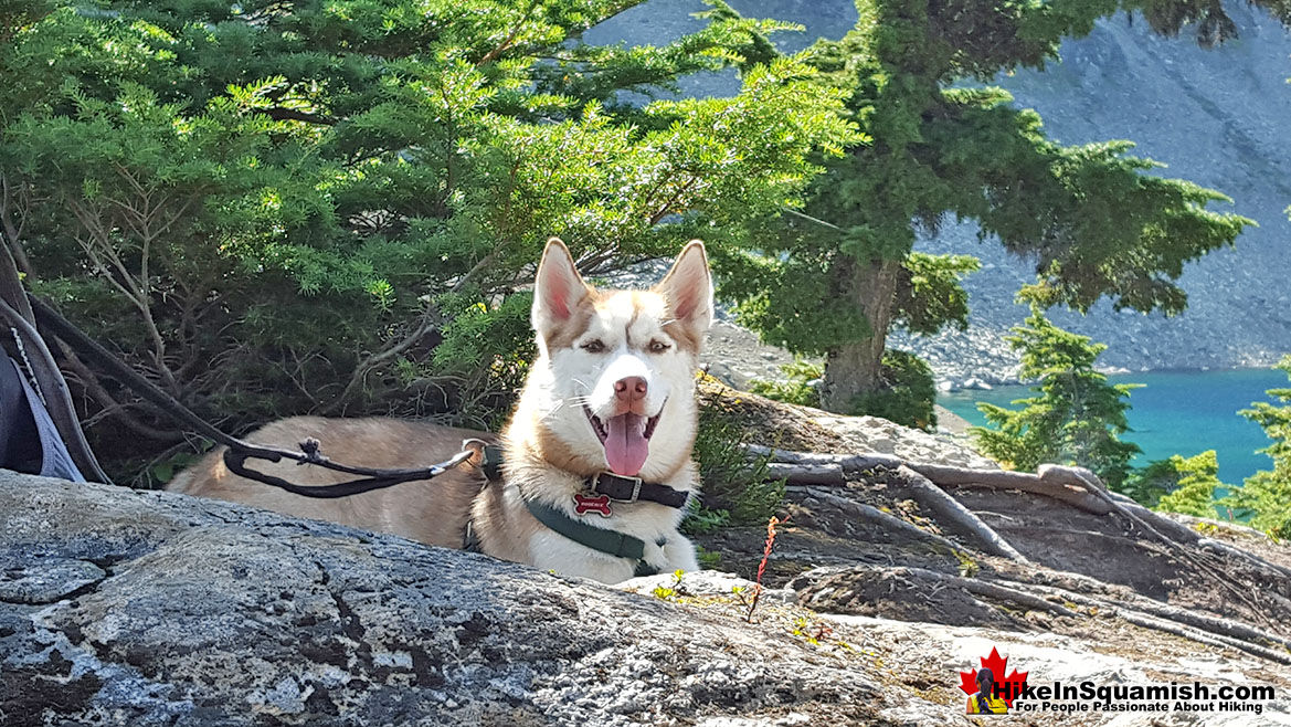 Cirque Lake is Dog Friendly